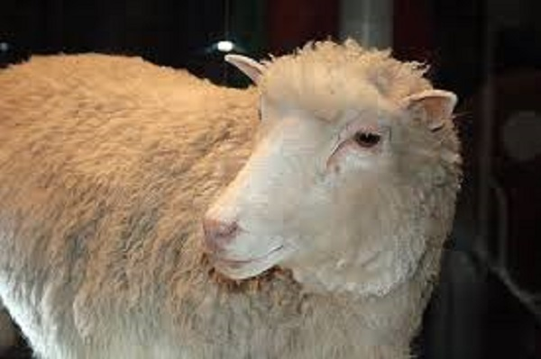 tlg-christian-news-health-science-scientists-cloning-more-animals-using-dolly-the-sheep-may-lead-to-human-cloning-tlg-christian-newshealth-and-sciencescientists-cloning-more-animals-using-dolly-the-sheep-may-lead-to-human-cloningdollythesheep-1